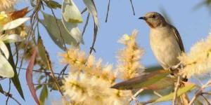 feature-bird